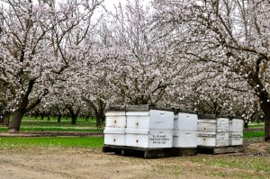 Bee activity was rendered quiet throughout the almond growing region by Wednesday's blustery winds and rain.