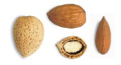 Butte almond