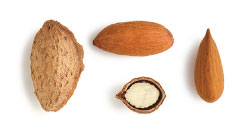 California almond variety