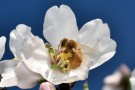 MMN Bee Close-up (6)