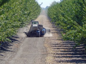 A sweeper preparing the almond crop to be picked up, both in the Arbuckle area of Colusa County.