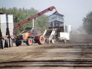 Loading operations in the Delano area of Kern County.
