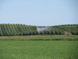 Aerial fungicide application west of Maxwell.