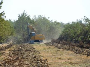 An excavator pulling trees in Tulare County