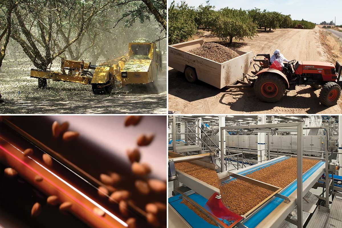 Harvesting quality for Blue Diamond Almonds